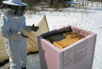 Hivernage abeilles dans la rue dans différentes régions de la Russie. Préparation des abeilles à l'hiver dans la rue