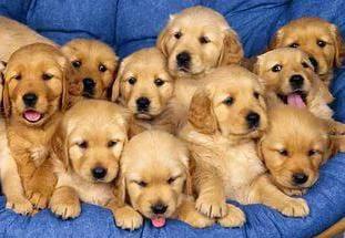 """""""Fortikarb"""" für Hunde – die Gesundheit Ihres Tieres"""