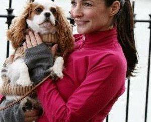 Pies Cavalier King Charles Spaniel: opinie, opis rasy, hodowla
