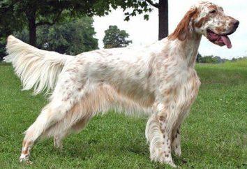 La mayoría de buena raza de perro: consejos para elegir la raza