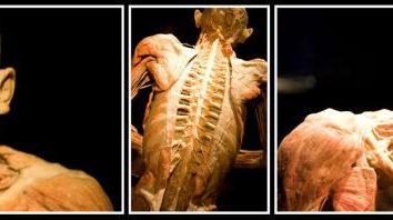 """Anatomische Ausstellung """"Das Geheimnis des Körpers"""" öffnet die Tür zum """"Universum in"""" jedem von uns"""
