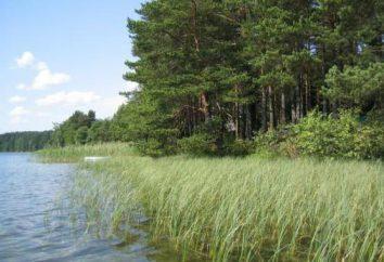 Komsomolsk Reserve: flora e fauna