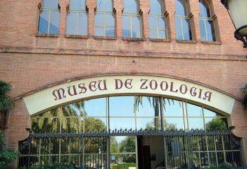 La maggior parte dei musei popolari di Barcellona