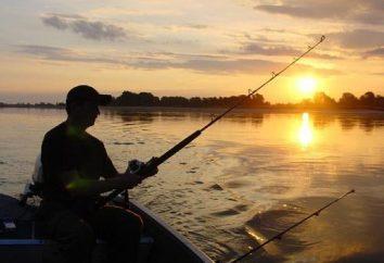 Interpretacja snów: ryba. Dlaczego marzyć to marzenie