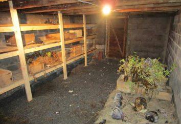 Rüben Lagerung im Keller, oder wie sie sich mit frischem Gemüse für das ganze Jahr zur Verfügung zu stellen