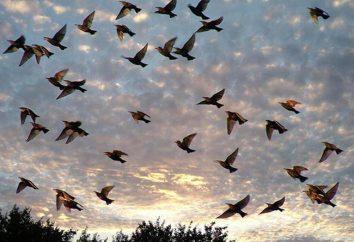ptaki pasmo środkowe: opis listy. Leśne i miejskie ptaki