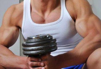 bíceps treino. Levantando halteres para bíceps
