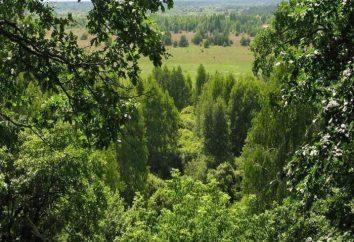 Polisky radiação – reserva ecológica: a data da fundação, o propósito da educação, a área, o regime de proteção, foto, descrição. Onde está a reserva ecológica Polessky State Radiation?