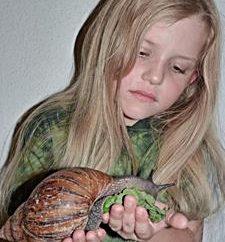Ślimaki Achatina: pielęgnacja i konserwacja. Co do paszy Achatina w domu. Wszystkie rodzaje Achatina: afrykański gigant