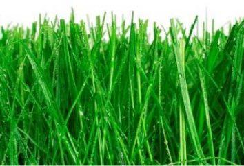 Idealny trawnik – jak siać. Wskazówki i sztuczki