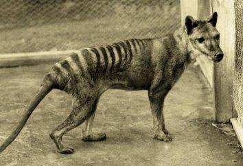 animales extintos – A Silent reproche a la humanidad