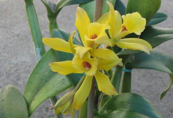 Ogni giorno Magic: fiori di vaniglia nella nostra vita