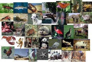 Quali sono gli animali? Alcune funzioni di classificazione