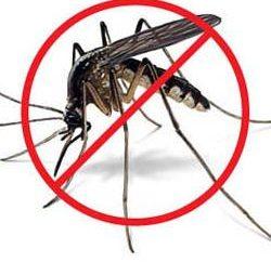 Wie mit Mücken beschäftigen. gute Ratschläge