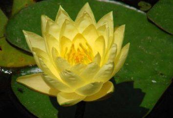 Maciek – w … opis, zdjęcia roślin