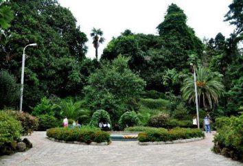 Giardino botanico di Batumi. verde del Capo