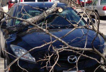 Co należy zrobić, jeśli samochód spadło drzewo: algorytm działań