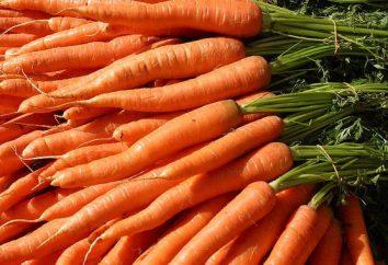 Piantando carote negli Urali – tempo. Carote: la coltivazione negli Urali