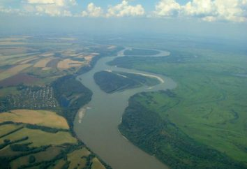 Los animales y las plantas del río Ob – explorando tierra natal