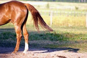 """Acconciatura """"coda di cavallo"""" – semplice, confortevole, elegante"""