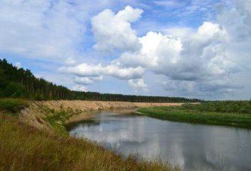 """Reserva """"Prisursky"""": descripción, la flora, la fauna, el clima"""