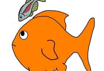 Zgodność ryb akwariowych. Tabela. Cechy obliczania