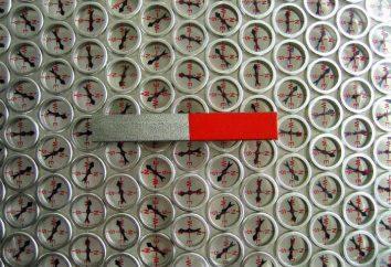 Qual è la fonte del campo magnetico? Il campo magnetico terrestre Fonte