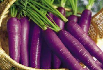 Questa antica e di nuovo conio carote viola
