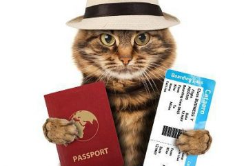 Międzynarodowy certyfikat weterynaryjny dla psów i kotów