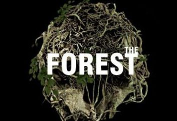 """¿Dónde y cómo se guardan en """"El Bosque""""?"""