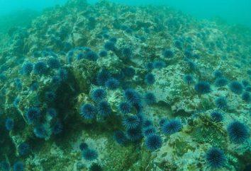 Les principales caractéristiques d'une algue. Caractéristiques et signification des algues