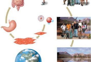 L'autorégulation en biologie – … Le concept de l'autorégulation des systèmes vivants