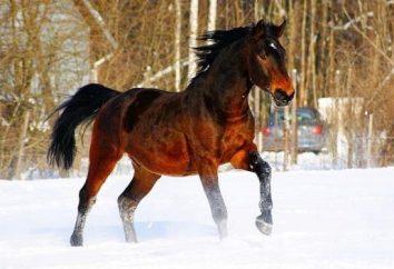 Bayard. Il più bel cavallo