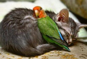 Chronić zwierzęta przed chorobami: jak ogrzać papugę