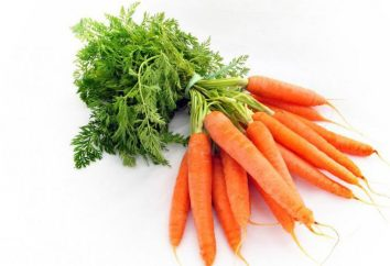 Riddles cerca de cenoura para crianças. Idéias sobre como levar uma criança (para adultos)