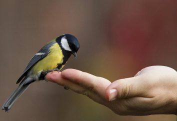 Sobre o que um pássaro sonha? Interpretação dos sonhos: a interpretação de um sonho
