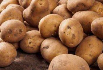 Colombo Ziemniaki: opis, uprawa, właściwości