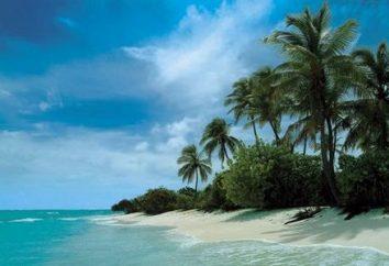 Eine einsame Insel: Wie um zu überleben und nicht in Panik
