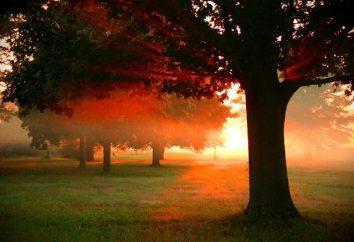 Najciekawsze cytaty o zachodzie słońca