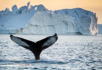 Que es dueño de Groenlandia, y cuál es su estado?