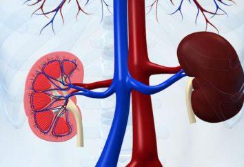 Pominięcie nerki: objawy, skutki i leczenie
