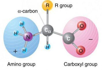 Istidina: formula, le reazioni chimiche