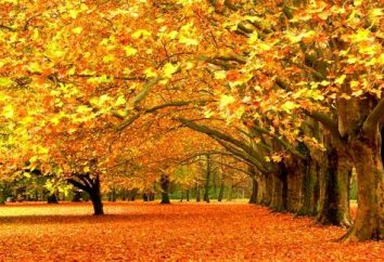 Jaki jest jesień? Uczymy!