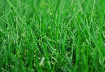Como plantar grama do gramado por conta própria?