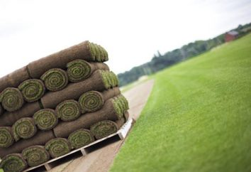 Turf – opinie. Jak położyć darń? Sztuczny trawnik rolki