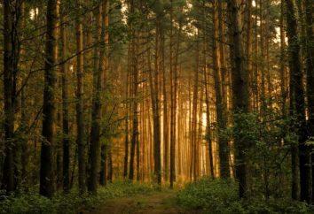 valor material y espiritual de los bosques para el hombre antiguo