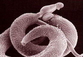 Schistosomiasis: objawy, leczenie, diagnostyka