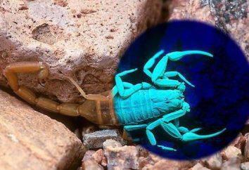 ¿De qué color es la sangre de los escorpiones y arañas?