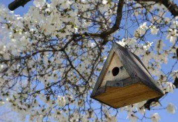 Algumas dicas simples sobre como pendurar corretamente o birdhouse