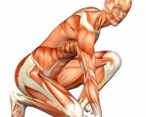 Struktura i funkcja mięśni ludzkich